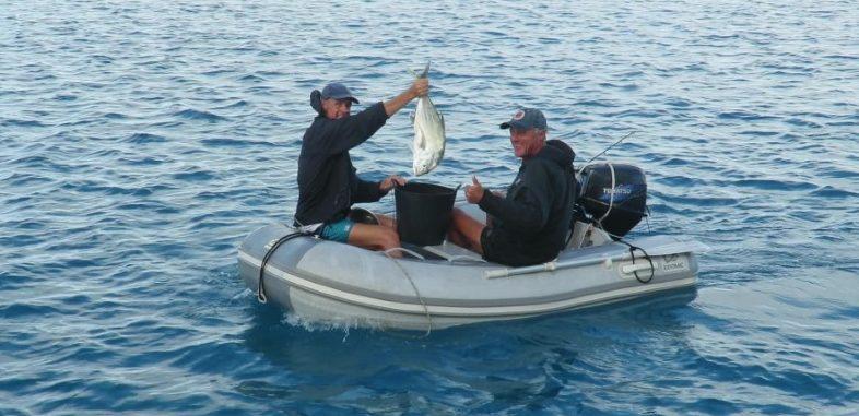 visserslatijn
